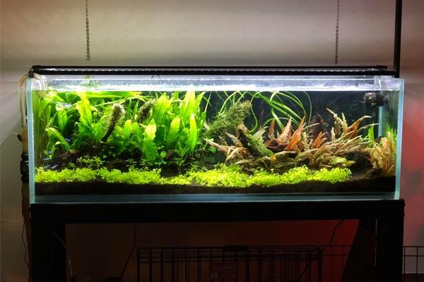 Сколько нужно кельвинов для растений